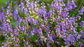 Diese Pflanzen sind besonders insektenfreundlich (Teil 3)