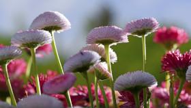 Diese Pflanzen sind besonders insektenfreundlich (Teil 2)