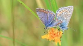 Wir machen das Oldenburger Land wieder fit für Insekten