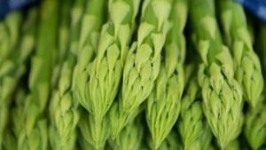 Grünen Spargel richtig lagern
