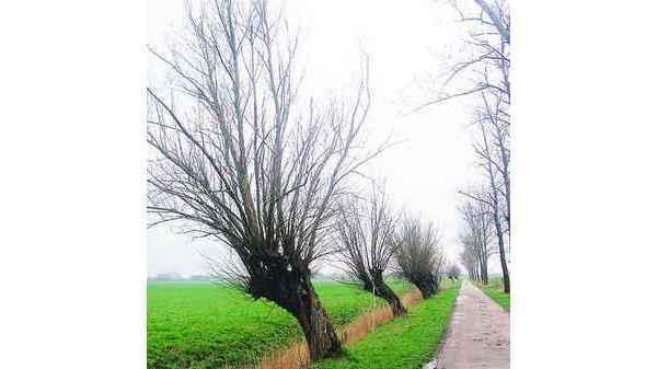 Mitmachakt Baum Zum Basteln Spielen Und Heilen