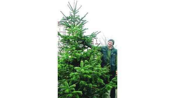 Nordmanntanne Weihnachtsbaum.Weihnachtsbaum Nordenham Auch Die Nordmanntanne Mag S Warm