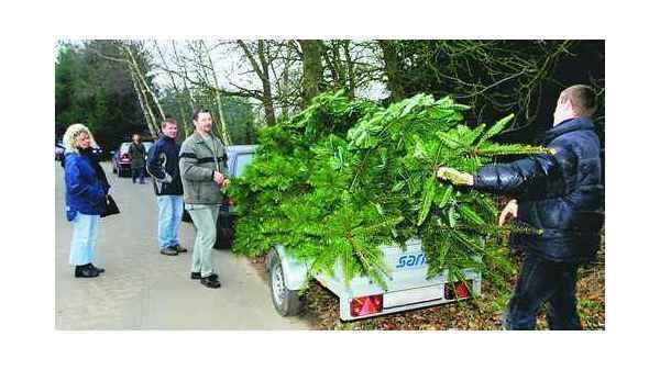 Tannenbaum Selber Schlagen Bremen.Weihnachtsaktion Ganderkesee Heute Großes Tannenbaum Schlagen