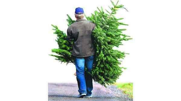 Tannenbaum Selber Schlagen Bremen.Weihnachtsbäume Oldenburg Nordmänner überall Gefragt