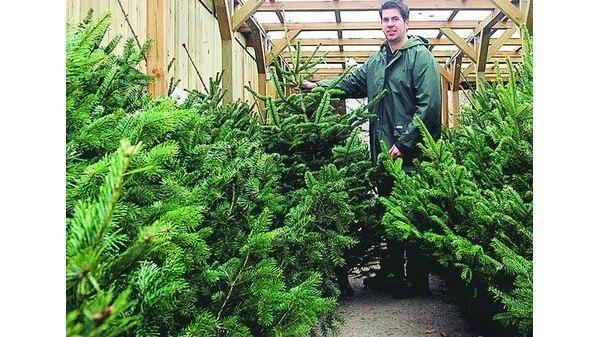 Tannenbaum Preise.Weihnachten Hude Am Tannenbaum Die Preise Hängen