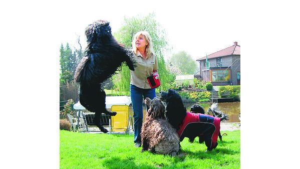 HOBBY BERNE: Wasserhunde plantschen in der Ollen