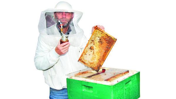 Interview Bienen Halten Keinen Winterschlaf