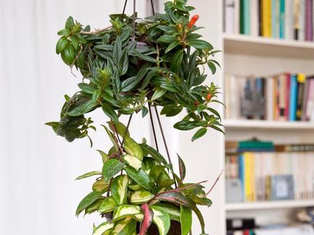 Einfach Mal Abhangen Zimmerpflanzen In Ampeln Setzen