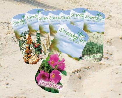 Dünenlandschaft Im Garten Anlegen expertentipp der küste in den garten strandgrün