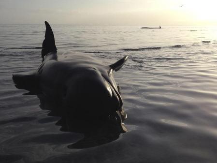 Wale Neuseeland