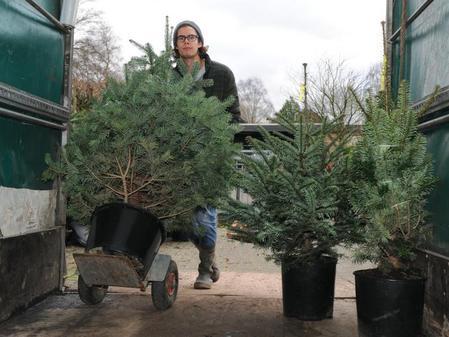 Weihnachtsbaume mieten niedersachsen