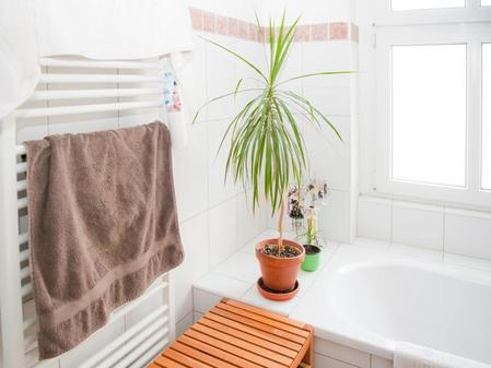 Exemplare Für Dunkle Ecken Unter 500 Lux Stirbt Die Zimmerpflanze