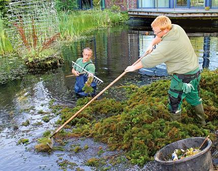 Aktion teich von m ll und dreck befreit for Teich reinigen fische