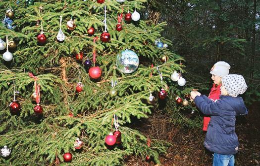 christbaum littel im wald wartet das weihnachtsr tsel. Black Bedroom Furniture Sets. Home Design Ideas