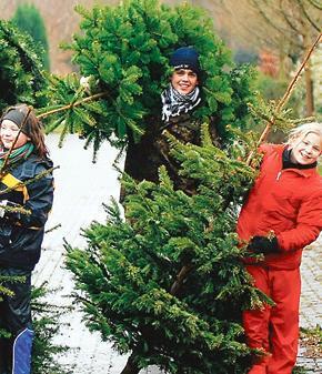 Wann Weihnachtsbaum Kaufen.Weihnachtsbaum Kaufen In Oldenburg Ab 10 Dezember