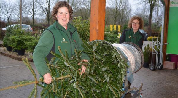 Weihnachtsbaum Kaufen Kiel.Verkauf Wardenburg Endspurt Zum Weihnachtsbaum