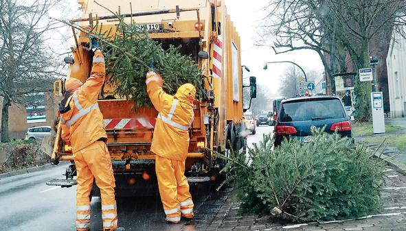 Tannenbaum Wegwerfen.Entsorgung In Oldenburg Oldenburg Das Prachtstück Ist Nun Grünabfall