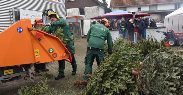 Weihnachtsbaum Tradition.Tradition Oberhammelwarden Moorriem Aus Der Traum Vom Weihnachtsbaum
