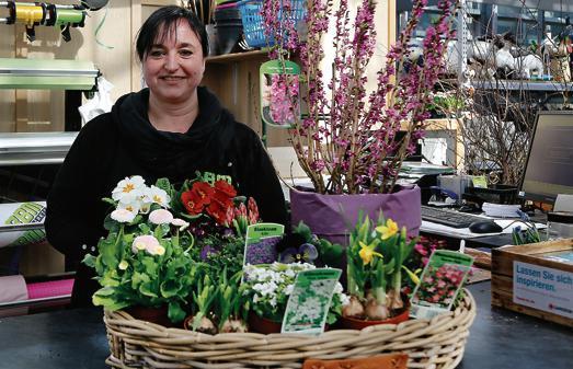 Baumarkt Friesoythe garten friesoythe schon im april kann gepflanzt werden