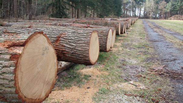 Holz Ganderkesee Eiche Ist Sehr Gefragt Aber Knapp