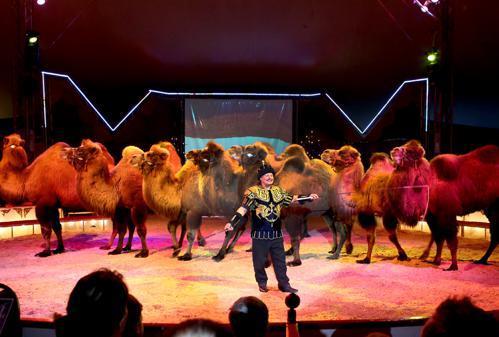 Circus Belly In Delmenhorst Manege Frei Für Robby Und Den Ziehvater