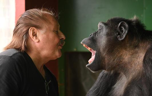 Gerichtsurteil Zu Schimpansenmännchen Robby Darf Beim Zirkus Bleiben