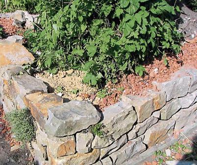 Mauern: Steine sorgen für Vielfalt im Garten