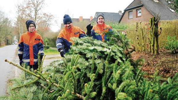 Bis Wann Bleibt Der Weihnachtsbaum Stehen.Abholservice In Oldenburg O Tannenbaum Die Sammler Kommen