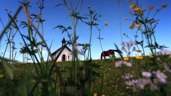 Feuerwehreinsatz Im Kreis Verden: Missliche Lage – Pferd