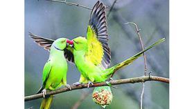 wiesbaden papageien