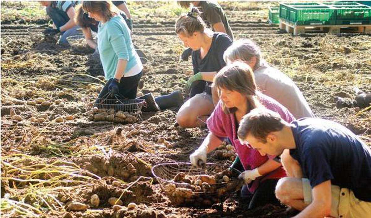 Landwirtschaft Oldenburg: Ein Gemüsehof mitten in der Stadt