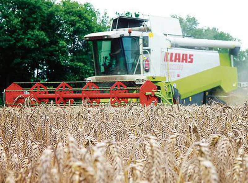 Landwirtschaft Im Kreis Oldenburg: Wetter sorgt für
