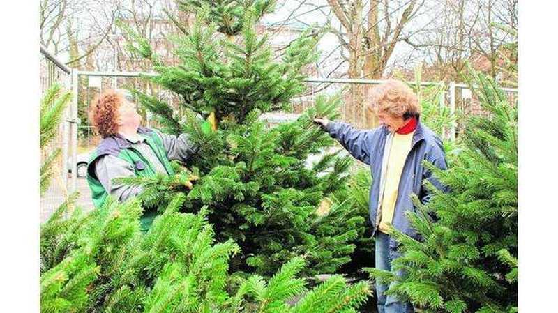 Weihnachtsbaum Kaufen Bremen.Weihnachtsbäume Nordmanntannen Pieksen Weniger