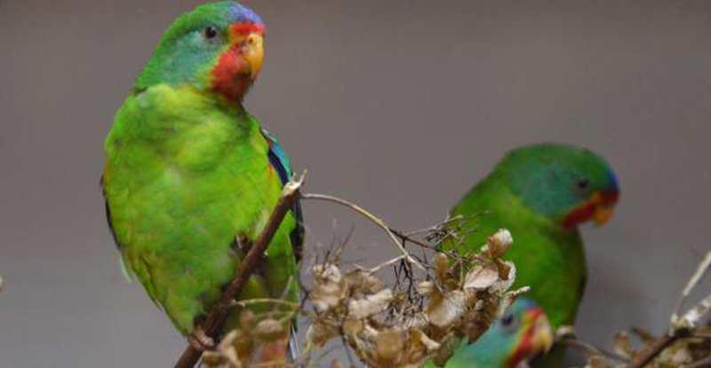 Vogelschau: Sie zeigen sich von ihrer bunten Seite - Nordwest-Zeitung