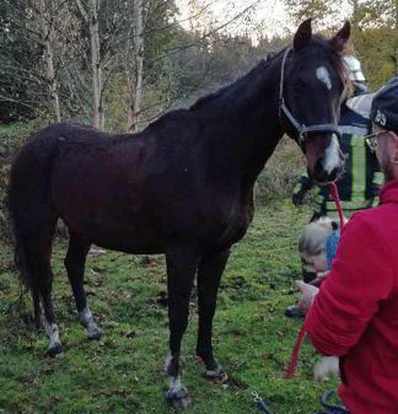 Tierrettung In Edewecht: Feuerwehr rettet Pferd aus Graben - Nordwest-Zeitung