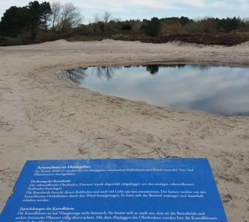 Naturschutz: Damit Heide eine Chance hat - Nordwest-Zeitung
